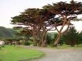 apollo-bay-vic-trees